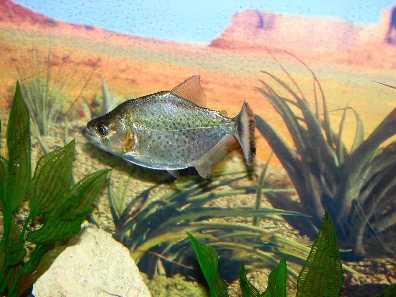 Couple shots of my fish. DSC02632