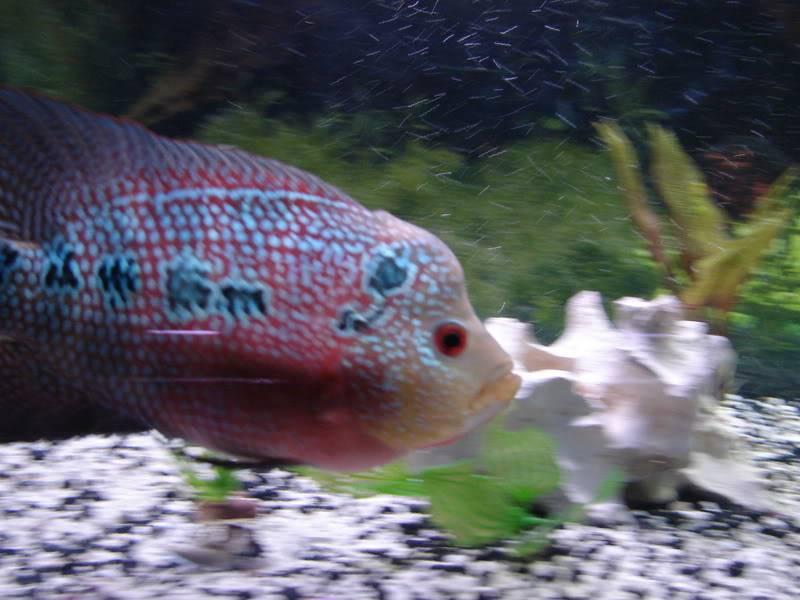 Couple shots of my fish. DSC02663