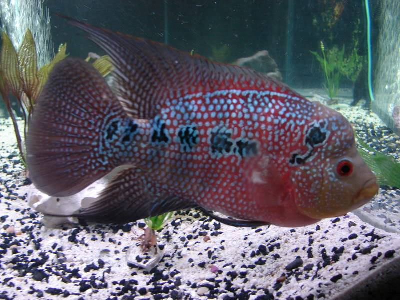 Couple shots of my fish. DSC02674