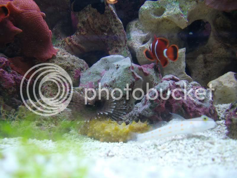 Tank SHot of my 100 gallon reef SANY0034