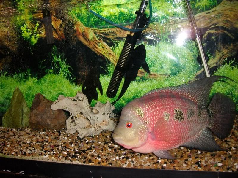 Couple shots of my fish. SANY0059