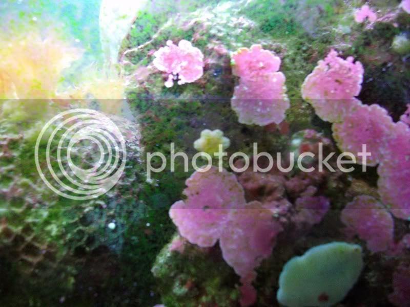 Tank SHot of my 100 gallon reef SANY0071-2