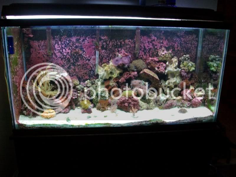 Tank SHot of my 100 gallon reef SANY0294