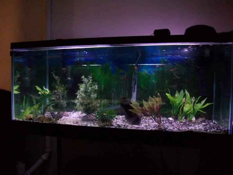 Couple shots of my fish. SANY0297