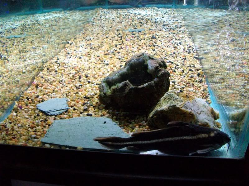 Couple shots of my fish. SANY0302