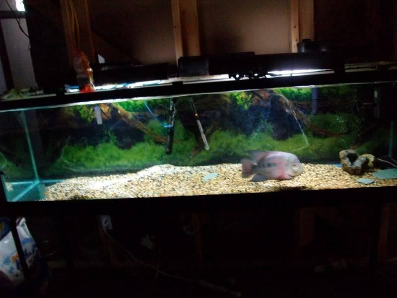 Couple shots of my fish. SANY0303