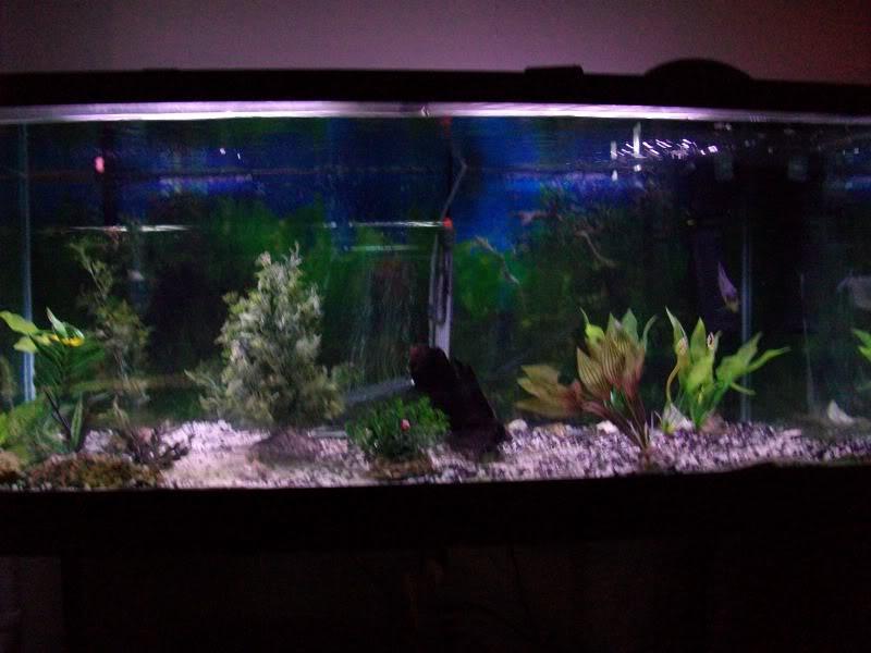 Couple shots of my fish. SANY0309