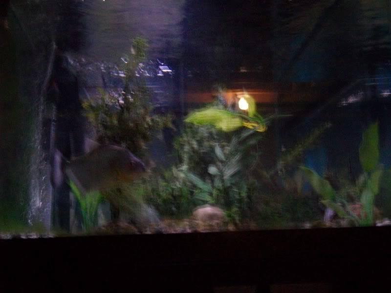 Couple shots of my fish. SANY0323