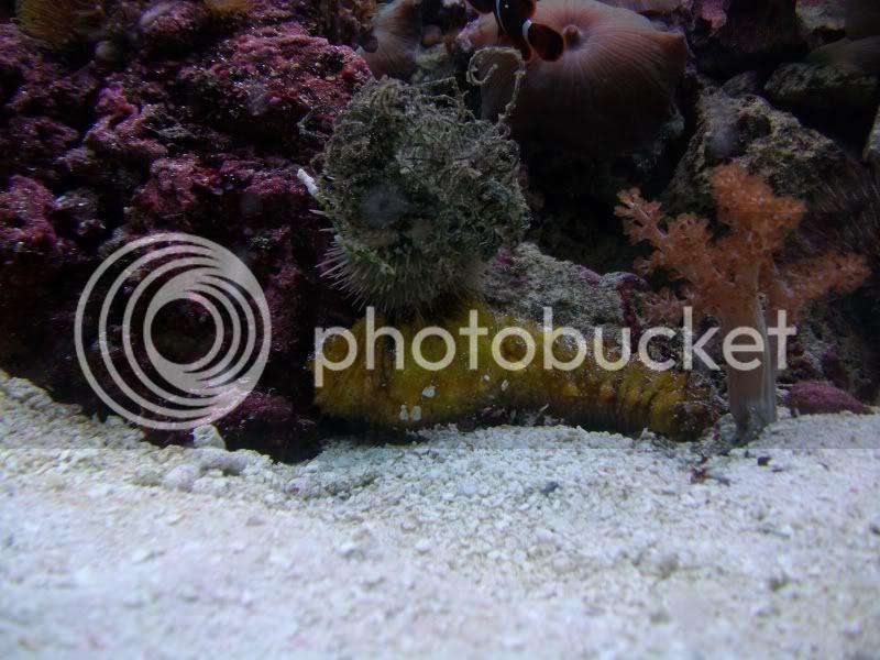 Tank SHot of my 100 gallon reef SANY0382