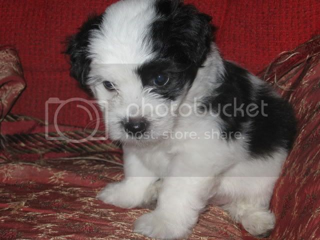 Fotos de nuestras mascotas xD IMG_0035