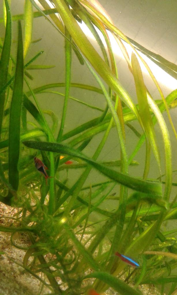 presentation de mon aquarium 160 litres amazonien 20140806_203448_zps04b93c1c