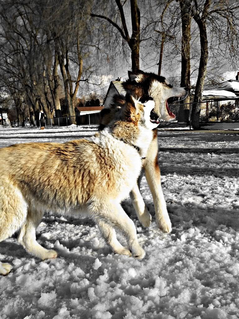 Me n Nishka adventures!! PicsArt_1360889704123_zps7fbd4617