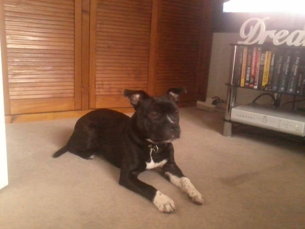 my dog vinnie 2014-05-11194544_zps65e63bb3