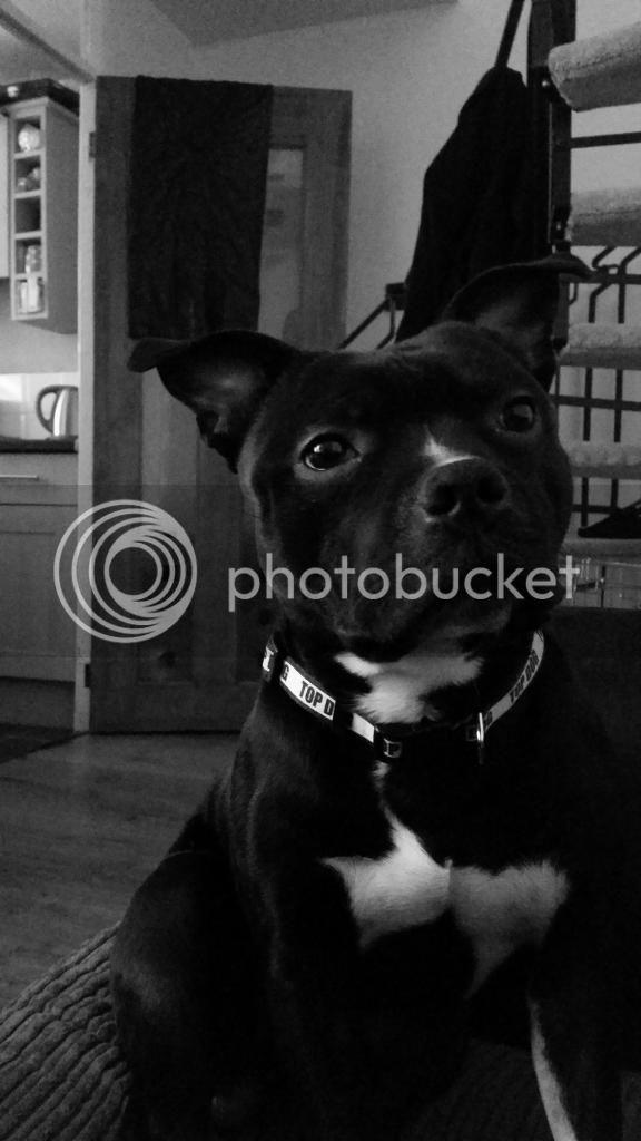 my dog vinnie 20140815_144745_zpsd276a544