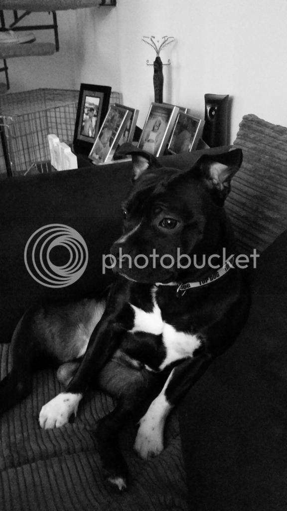 my dog vinnie 20140815_144923_zps4e4a5ffb