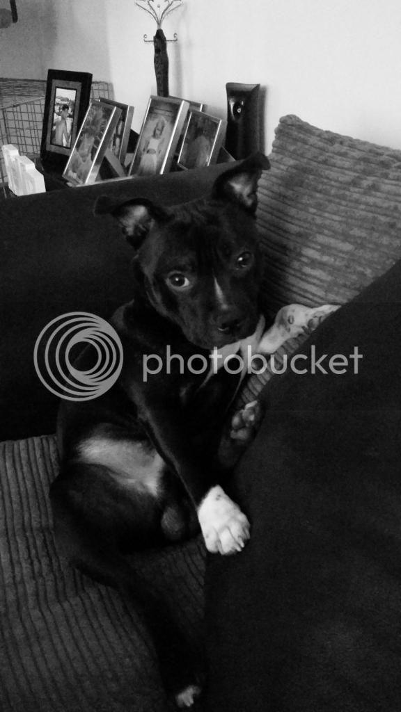 my dog vinnie 20140815_145432_zps1c2575e3