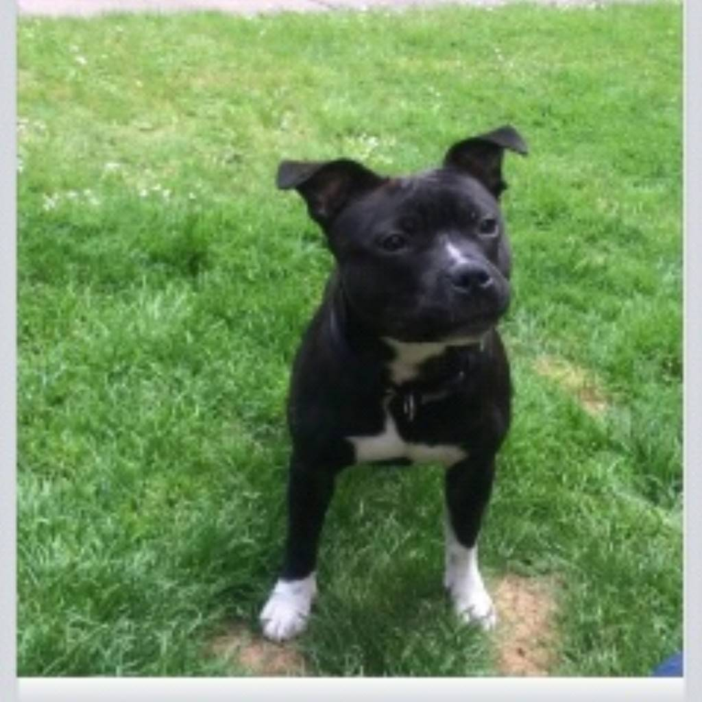my dog vinnie IMG_20140603_210316_zps565911d5