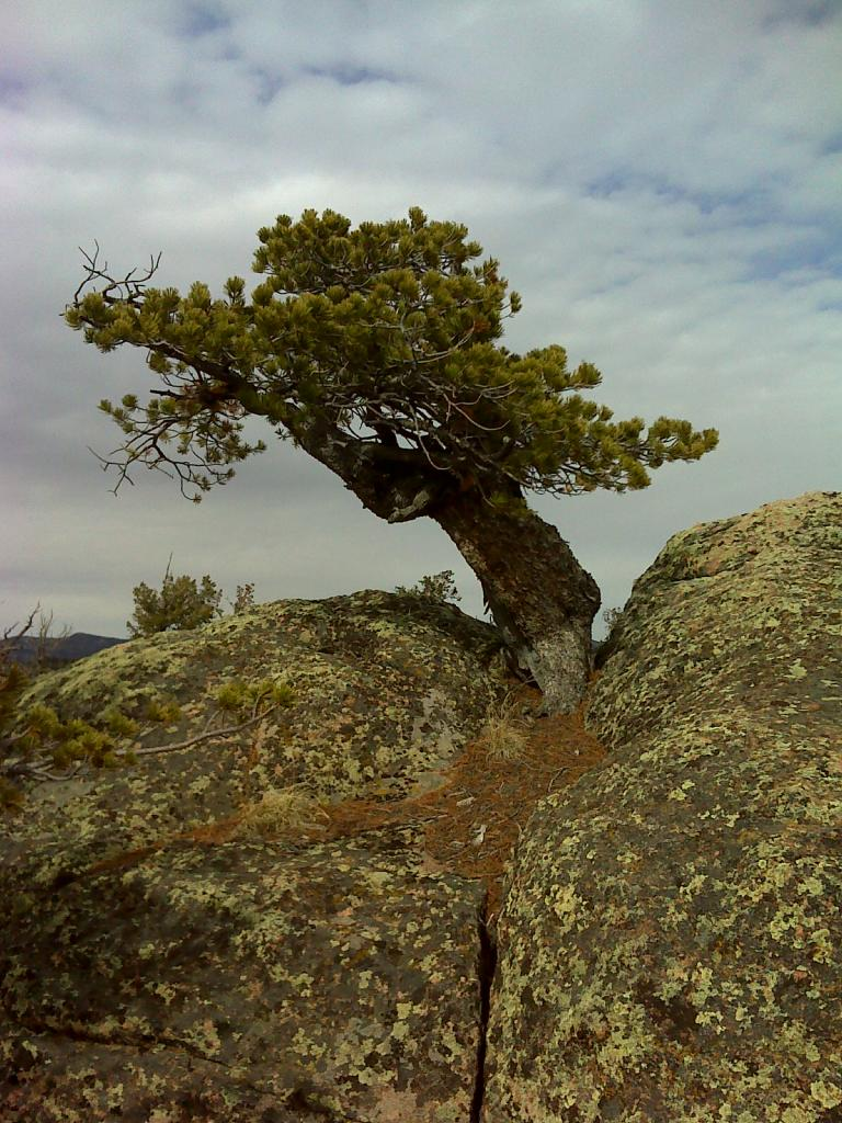 Rooted in Stone, a poem Limber27_cleaned_zps8fffa55b