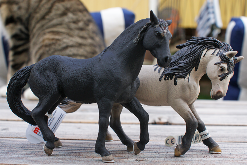 TSC's Mojö horses Andalusierhastar1_zpsb946c240