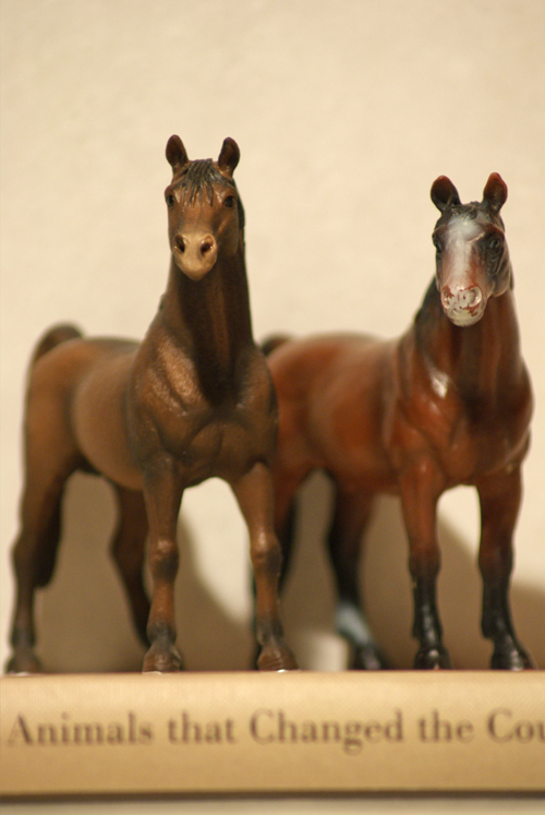 Horse additions (New: 9th December) Araber_zpsdbe0f69d
