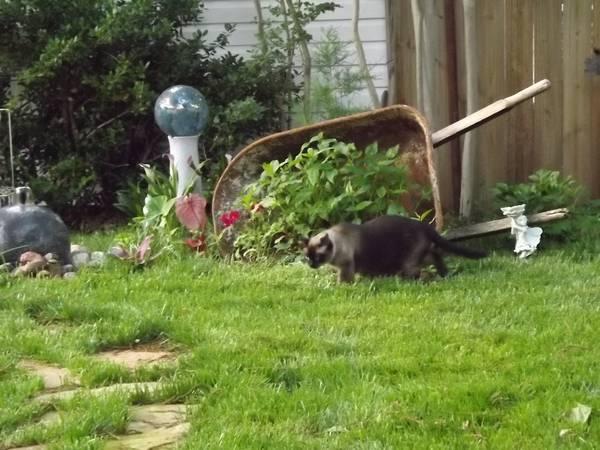 Missing Cat-My Girl (Bethany) 00F0F_30G7ksnDcdh_600x450_zpsb0d9c787