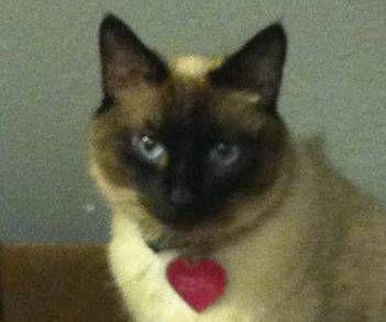 Missing Cat- Zephyr (Norman)  00T0T_g8OYsSKzSn2_600x450_zps3dcfeceb