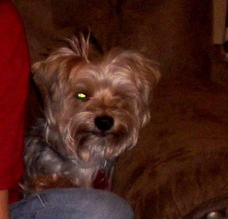 Missing Dog- (Yukon) 00Y0Y_alj7rYUNPXr_600x450_zps9611f43e