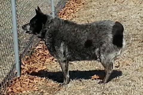 Missing Dog-Max (North Norman/Newalla OK)  00l0l_6y8r4mKWV83_600x450_zps4b176163