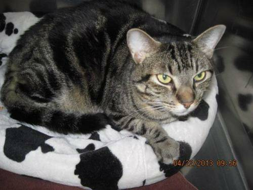 Missing Cat-(Ashburn, VA) 3r83t43se5rd5sd5qcd7bdb1a1bc7056d1cae_zpsee82e0a9