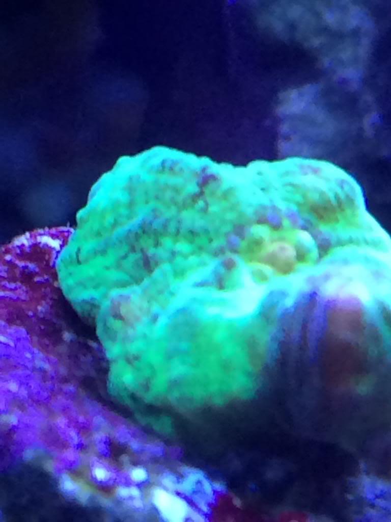 New coral!! 9AC99BA6-9C55-41B4-A287-B9F3CC910A6F_zpsl3tqvmhx