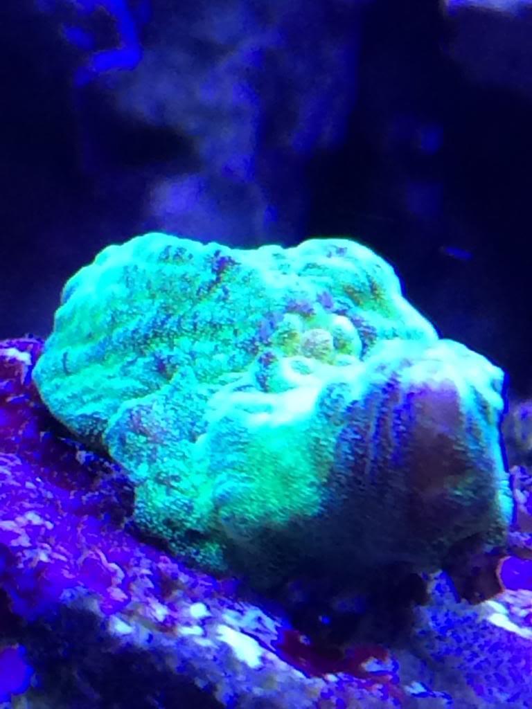 New coral!! 9B2D1F0C-1F14-468B-B46E-837A82249537_zpsrng8juji