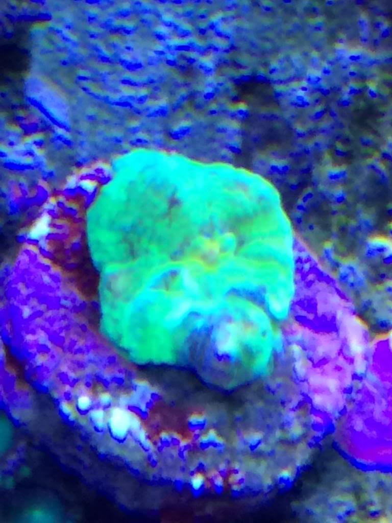 New coral!! AFC9D337-D27F-4765-8856-644E884D87D5_zpsy3vtcxpg