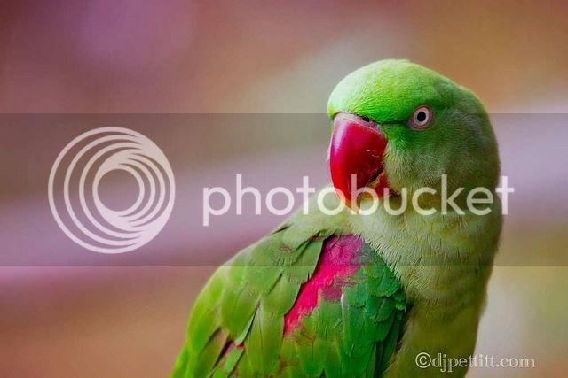 photo 1385774_503798426385411_1336634221_n_zps32532d58.jpg