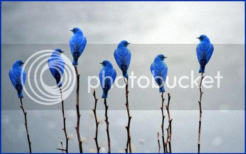 photo 1544966_794811350534416_1287978707_n_zpse3b8d56d.jpg