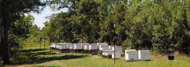 photo Honey-Bee-Hives-Altos-Farm-1400x500_zpsvrtevkwk.jpg