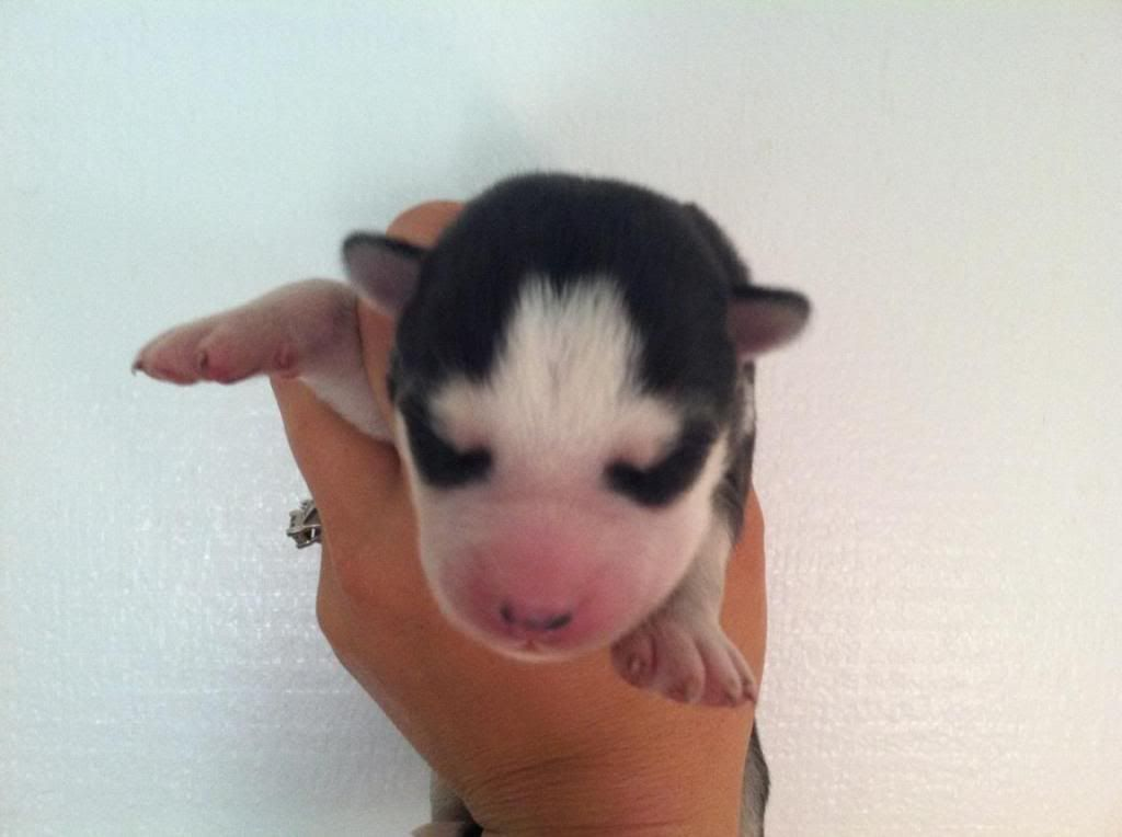 Mishka! My little teddy bear- Updated 6/29/13 IMG_2492_zpsa2d76407