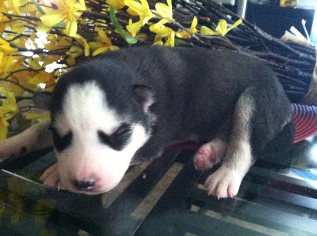 Mishka! My little teddy bear- Updated 6/29/13 IMG_9885_zps0b02c949