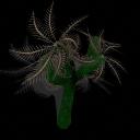 Palmera Spiral [Reto contra Miguelcho] PalmeraSpiral_zps8fc3d4d6