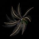 Palmera Spiral [Reto contra Miguelcho] PalmeraSpiralbrote_zps2395b1cf