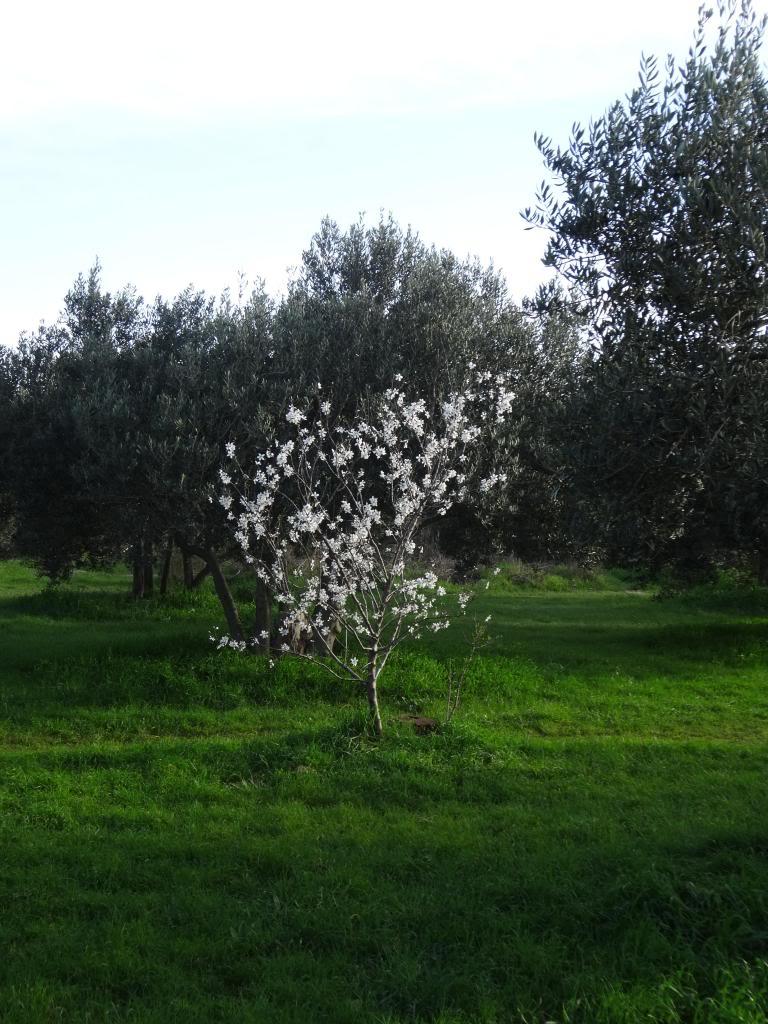 Dalmatinsko Proljeće 2014 DSC01296_zpse5b1ddcf