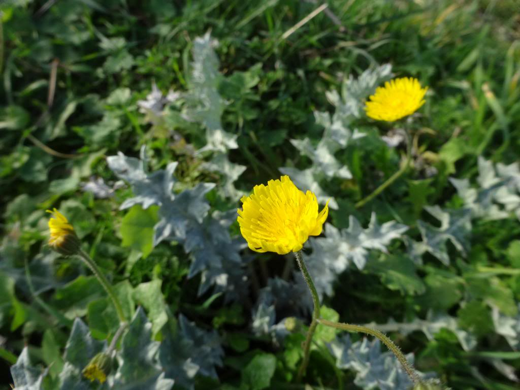 Dalmatinsko Proljeće 2014 DSC01302_zps267502bd
