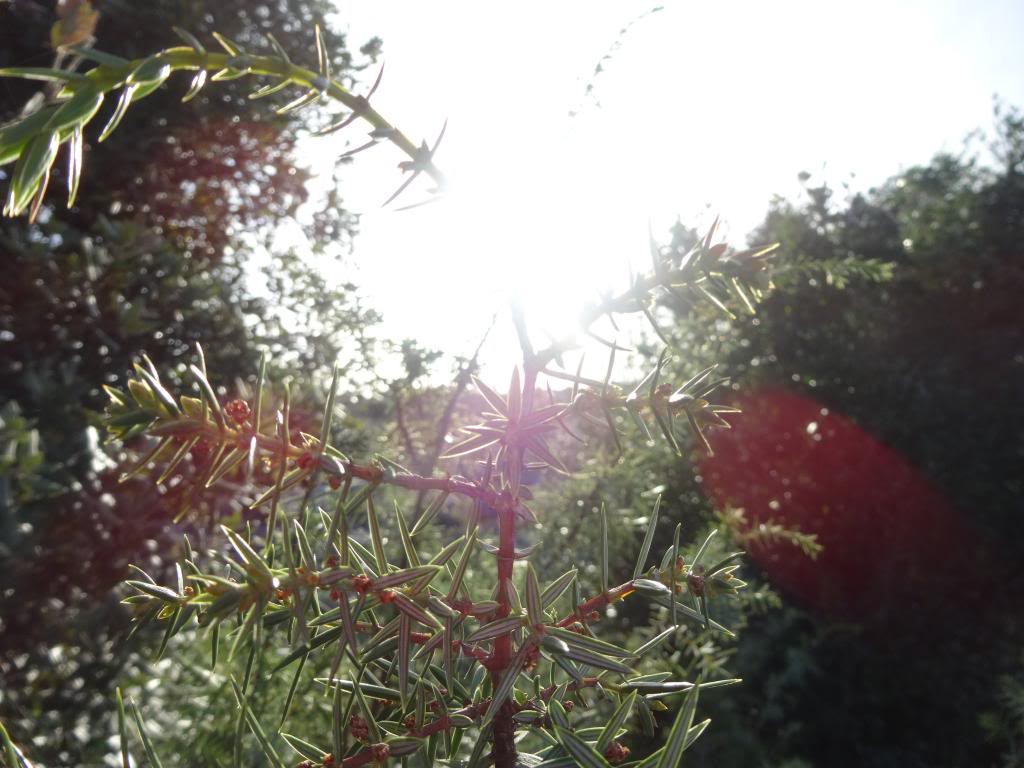 Dalmatinsko Proljeće 2014 DSC01307_zpsa67b85bc