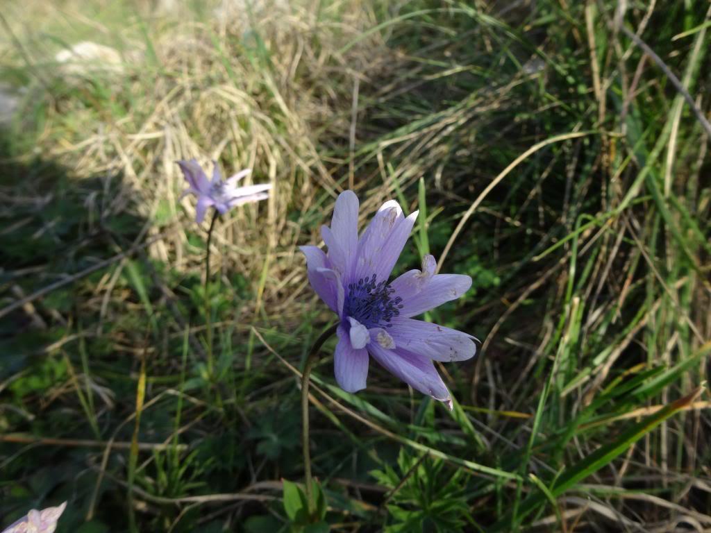 Dalmatinsko Proljeće 2014 DSC01312_zps2ec4f715