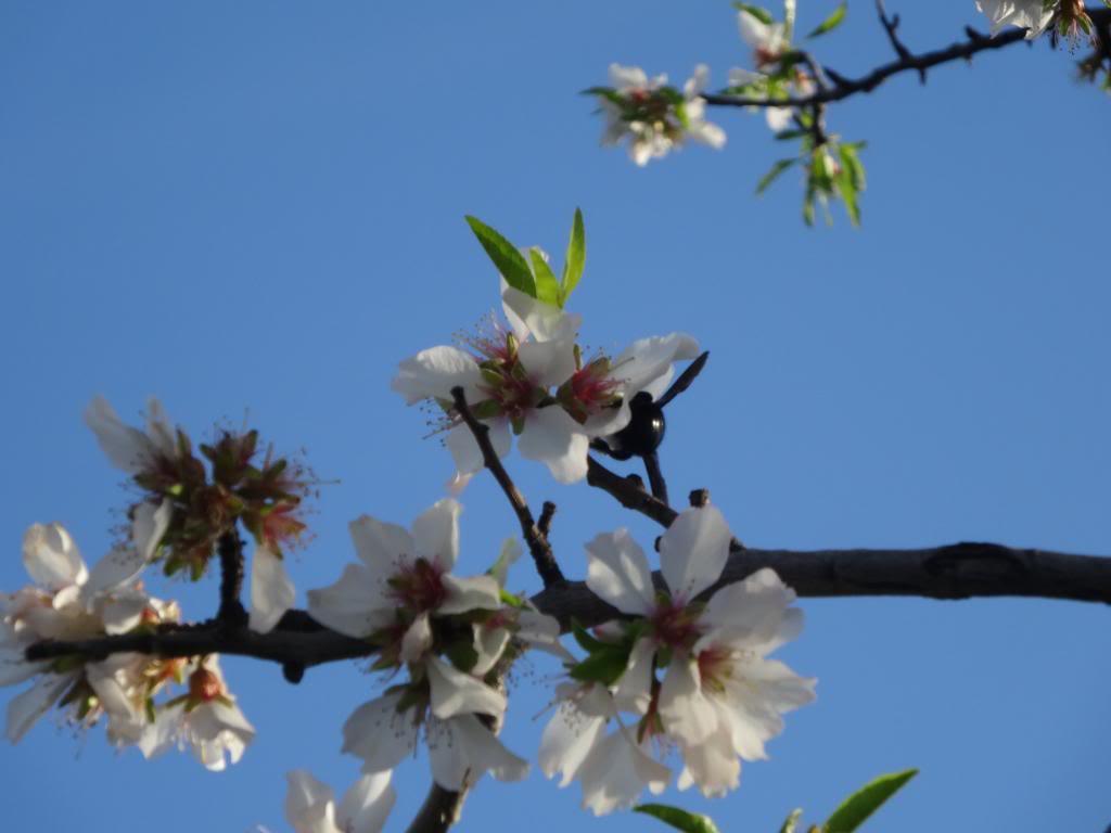 Dalmatinsko Proljeće 2014 DSC01314_zps8bb99ed9