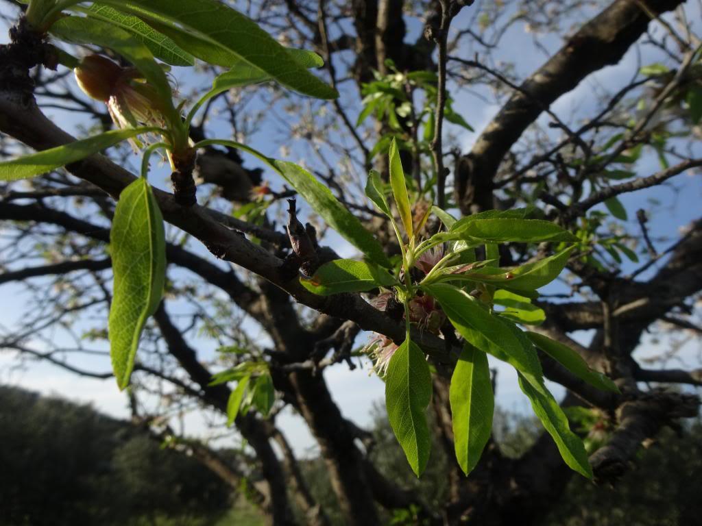 Dalmatinsko Proljeće 2014 DSC01315_zps233db264