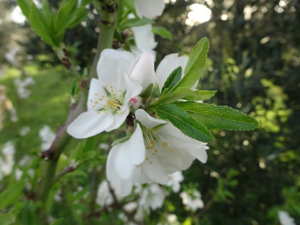 Dalmatinsko Proljeće 2014 DSC01318_zps62ae9869