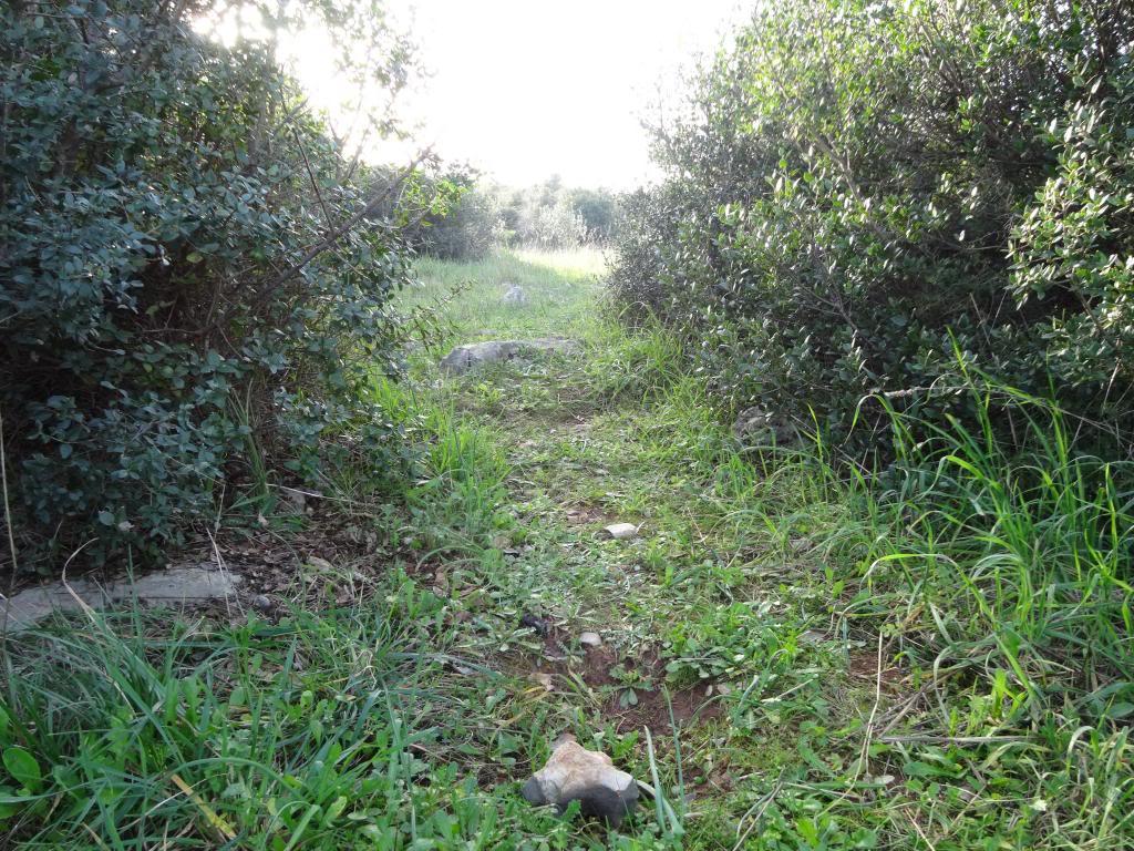Dalmatinsko Proljeće 2014 DSC01324_zpsddcf28f5