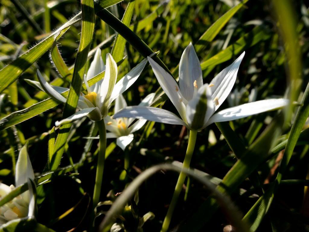 Dalmatinsko Proljeće 2014 DSC01419_zpsdf570bd9