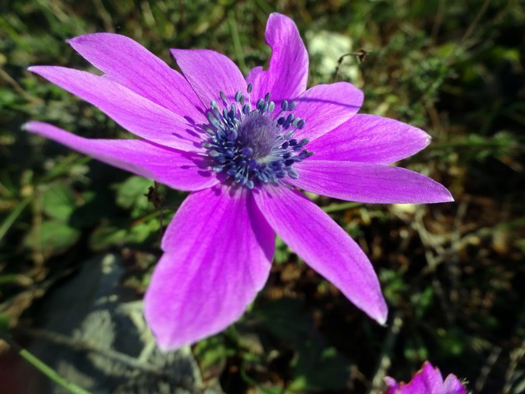 Dalmatinsko Proljeće 2014 DSC01448_zpsba9e7a2c