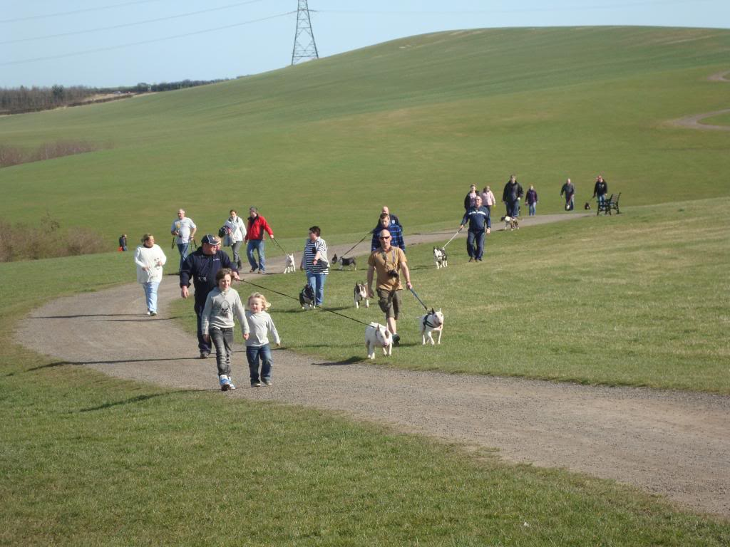 Bullie walks U.K. north east. DSC04332_zps13975572